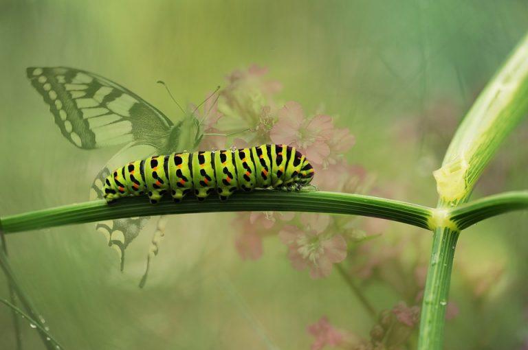 8 Morphing Caterpillar Inspiring Quotations for 2013