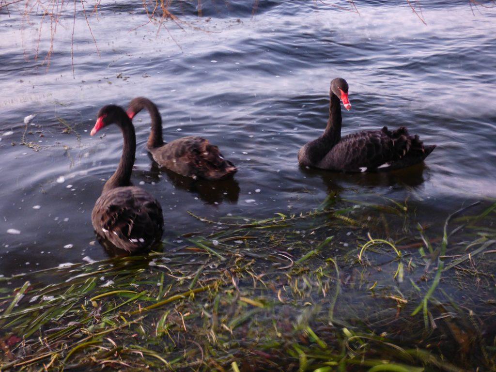 images ballarat wildlife - photo #33